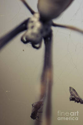 Golden Orb Photograph - Caught In A Web Of Entrapment by Jorgo Photography - Wall Art Gallery