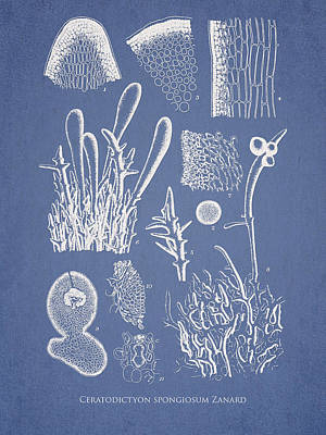 Ceratodictyon Spongiosum Zanard Art Print