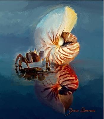 Chambered Nautilus And Crab Art Print by Ginger Sizemore