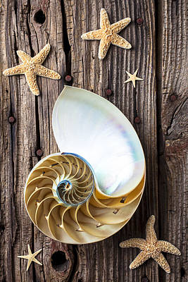 Knothole Photograph - Chambered Nautilus  by Garry Gay