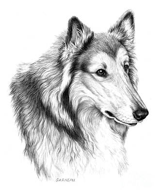 Herding Dog Drawing - Champ  by Catherine Garneau