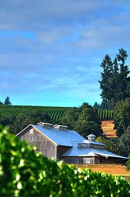Jerry Sodorff Royalty-Free and Rights-Managed Images - Chardonnay Vineyard 17954 by Jerry Sodorff