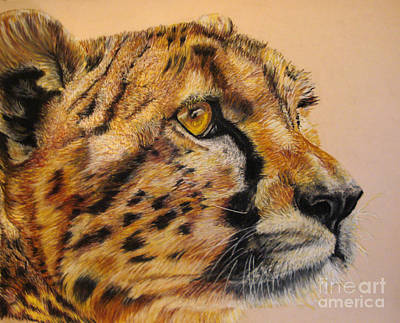 Painting - Cheetah Gaze by Ann Marie Chaffin