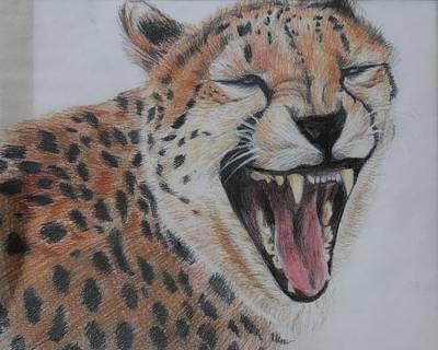 Cheetah Drawing - Cheetah  by Megan Wood
