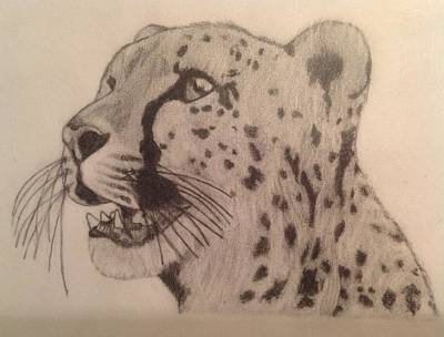 Cheetah Drawing - Cheetah by Noah Burdett