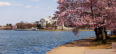 Cherry Blossoms Photograph - Cherry Blossom Trees In The Tidal Basin by Panoramic Images