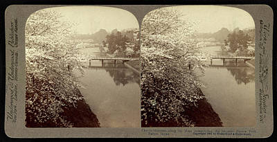 Cherry Blossom Drawing - Cherry-blossoms Along The Moat Surrounding The Imperial by Litz Collection