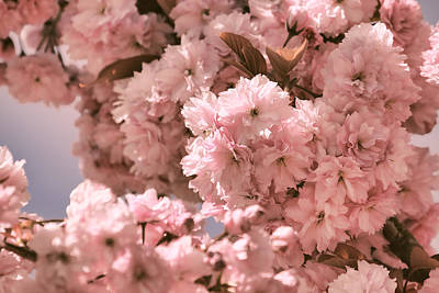 Cherry Blossoms Photograph - Cherry Blossoms In Spring by Peggy Collins