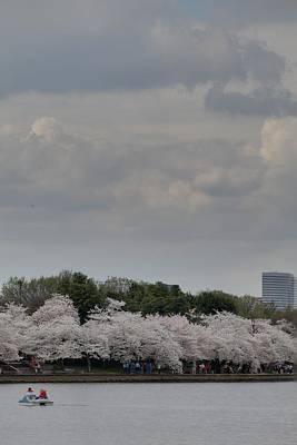 Cherry Blossoms - Washington Dc - 011311 Print by DC Photographer