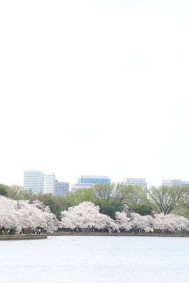 Cherry Blossoms - Washington Dc - 011316 Art Print by DC Photographer