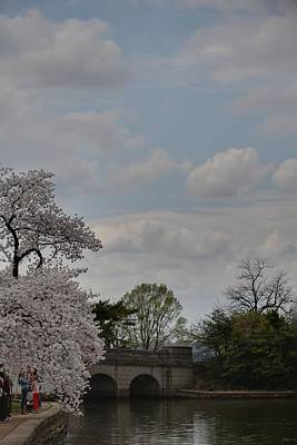 Trunk Photograph - Cherry Blossoms - Washington Dc - 011331 by DC Photographer