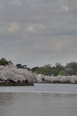 Cherry Blossoms - Washington Dc - 011335 Art Print by DC Photographer