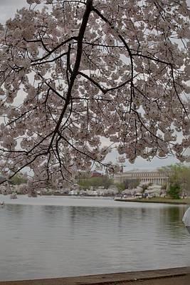 Memorial Photograph - Cherry Blossoms - Washington Dc - 011337 by DC Photographer