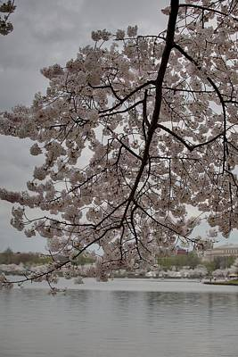 Outside Photograph - Cherry Blossoms - Washington Dc - 011338 by DC Photographer