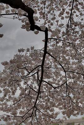 Jefferson Photograph - Cherry Blossoms - Washington Dc - 011339 by DC Photographer