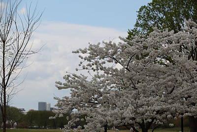 Cherry Blossoms - Washington Dc - 011344 Art Print by DC Photographer