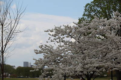 Cherry Blossoms - Washington Dc - 011345 Art Print by DC Photographer