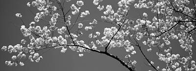 Cherry Blossoms Washington Dc Usa Art Print by Panoramic Images