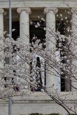 Tidal Photograph - Cherry Blossoms With Jefferson Memorial - Washington Dc - 01132 by DC Photographer