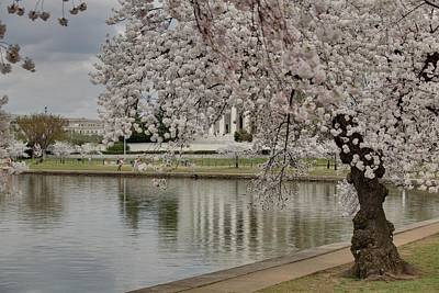 Cherry Blossoms With Jefferson Memorial - Washington Dc - 01135 Art Print by DC Photographer