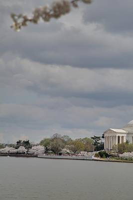 Tokyo Photograph - Cherry Blossoms With Jefferson Memorial - Washington Dc - 01138 by DC Photographer