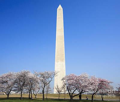 Washington Monument Digital Art - Cherry Trees And The Washington Monument by William Kuta