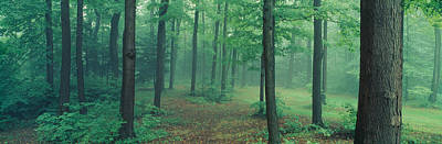Chestnut Ridge Park, Orchard Park, New Art Print by Panoramic Images