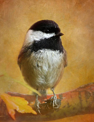 Cute Bird Photograph - Chickadee by Angie Vogel