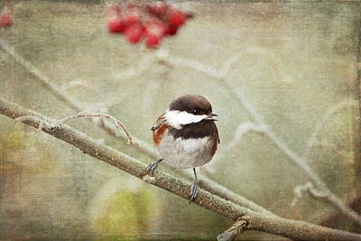 Photograph - Chickadee In Winter by Peggy Collins