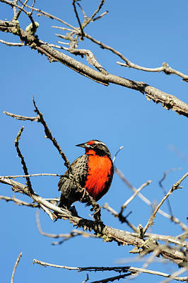 Meadowlark Wall Art - Photograph - Chile, Aysen, Valle Chacabuco by Fredrik Norrsell