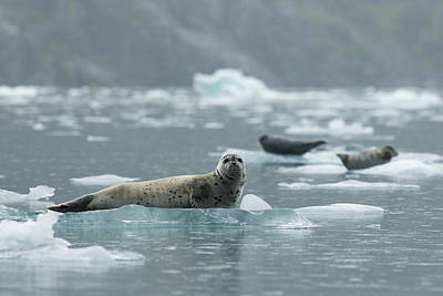 Photograph - Chilling by Ted Raynor