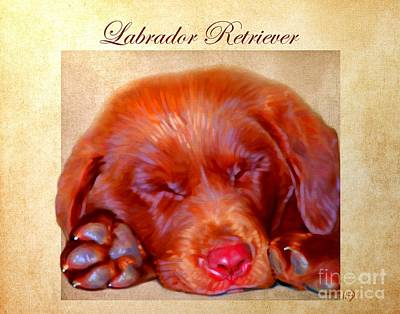 Chocolate Labrador Digital Art - Chocolate Labrador Puppy by Iain McDonald