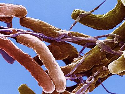 Infectious Photograph - Cholera Bacteria by Ami Images