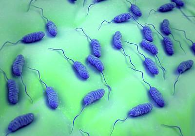 Microscopic Photograph - Cholera Bacteria by Science Artwork