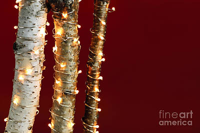 Christmas Lights On Birch Branches Art Print