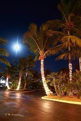 Photograph - Christmas Palms by R B Harper