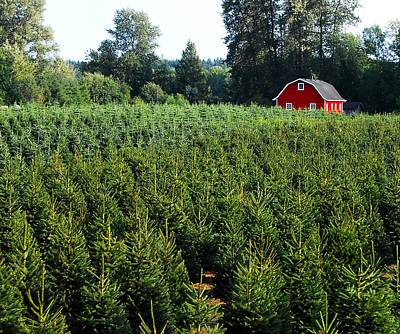 Photograph - Christmas Tree Farm by David Lee Thompson