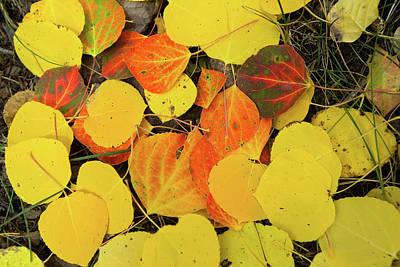 Photograph - Close-up Of Fallen Leaves, Maroon by Panoramic Images