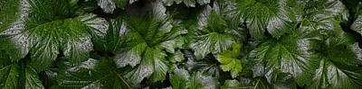 Close-up Of Green Leaves Art Print by Panoramic Images