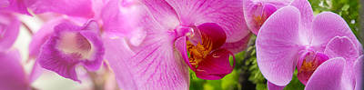 Passiflora Photograph - Close-up Of Purple Passion Flowers by Panoramic Images