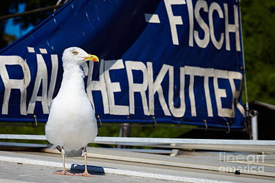 Photograph - Closeup Of A Seagull On A Fisher Boat  by Nick  Biemans