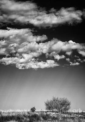 Photograph - Clouds And Brush by David Waldrop