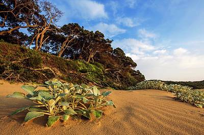 Botanical Beach Photograph - Coastal Forest by Peter Chadwick