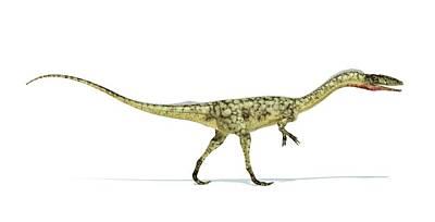 Coelophysis Photograph - Coelophysis Dinosaur by Leonello Calvetti