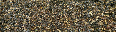 Coffee Beans, Costa Rica Art Print by Panoramic Images