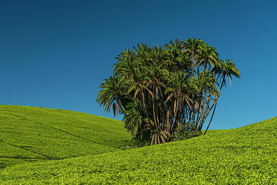 Aloha For Days - Collection Of Palm Trees Amongst Hills by Ian Cumming