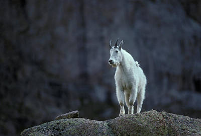 Goat Wall Art - Photograph - Colorado Mountains by Scott Warren