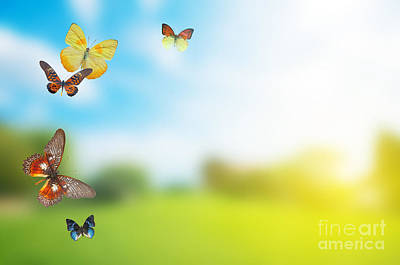 Pop Art Rights Managed Images - Colorful buttefly spring field Royalty-Free Image by Michal Bednarek