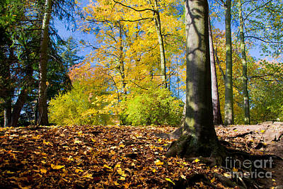 Change Photograph - Colorful Fall Autumn Park by Michal Bednarek