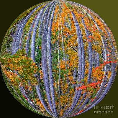 Colorful Fall Forest Art Print by Scott Cameron